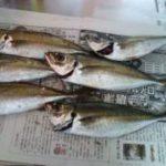 仮屋湾の地磯へチヌ釣りへ