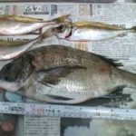 今年も仮屋湾の地磯にチヌ釣りへ行ってきました(^^)/