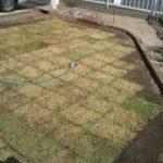 庭に芝生を敷いてみました(^^)/