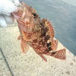 2011年最後の釣りは加部島の藻島の波止へエギング???