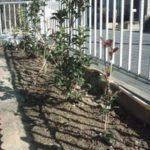 今回の庭作りは植栽を自分で植えてみます。
