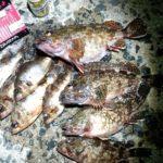 肥前町の漁港でアラカブ釣り