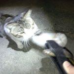 猫パンチとIPSリールシートのグリップ力